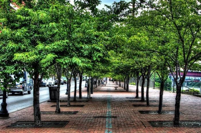 La CAPOTIZZATURA degli alberi urbani, una pratica da eliminare!